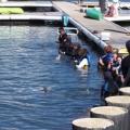 Delfines en Puerto Los Cabos