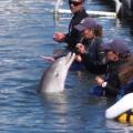 Delfines en Puerto Los Cabos 2