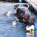 Delfines en Puerto Los Cabos 3